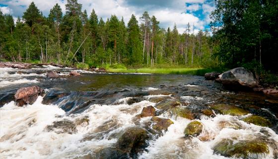 Тур «Древние водопады Карелии» на 1 день от туристической компании «Хохлома Тур». Скидка 50%