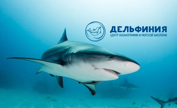 Скидка 50% на посещение выставки морских рыб и уникального шоу морских животных в центре океанографии и морской биологии «Дельфиния»